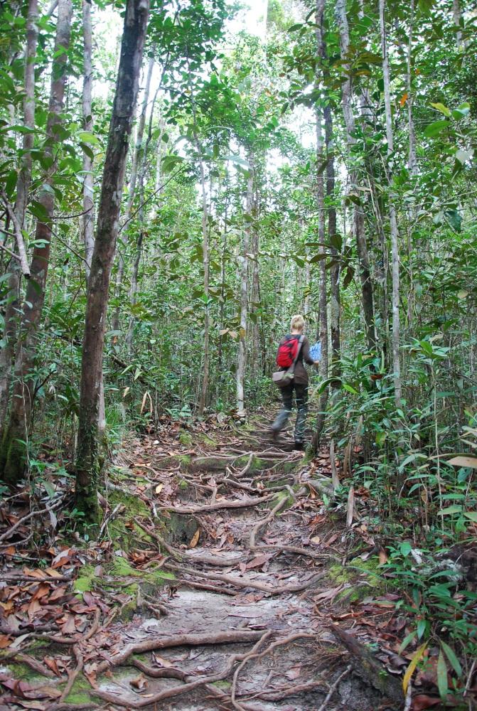 87. Śmieszne małpy z długim nosem i inni mieszkańcy Bako. Borneo. (6/6)